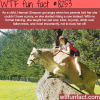 this girl trained her cow to jump like a horse