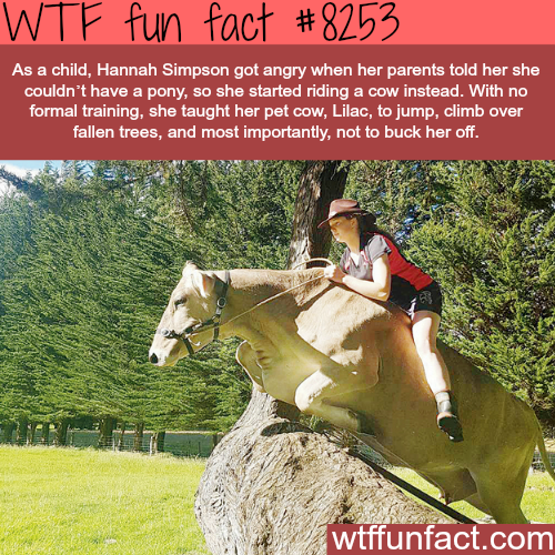 This girl trained her cow to jump like a horse - WTF fun facts