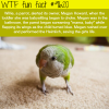 this parrot saved a babys life wtf fun fact