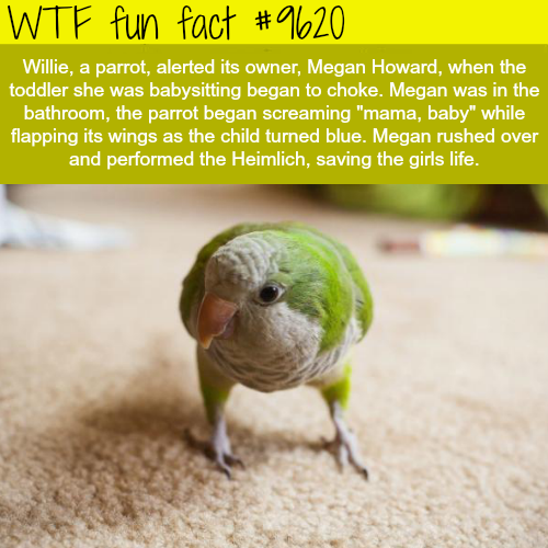This parrot saved a baby's life - WTF fun fact