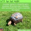 this tortoise was injured in a fire wtf fun
