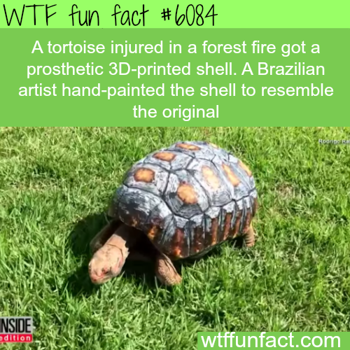 This tortoise was injured in a fire - WTF fun facts