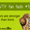 tigers facts