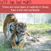 tigers in texas wtf fun fact