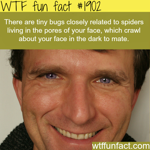Tiny bugs living on your pores -WTF fun facts