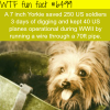 tiny yorkie wtf fun facts