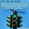 tipperary hill ny wtf fun facts