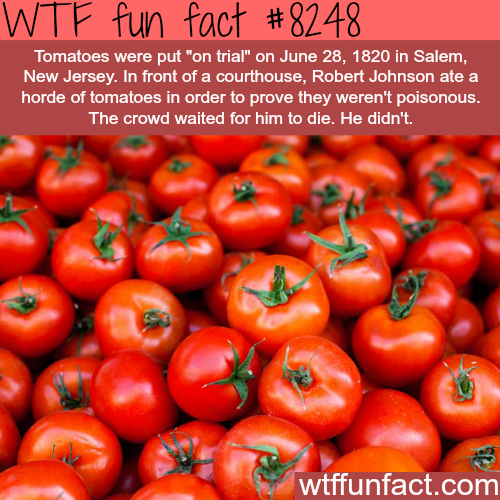 """Tomatoes put """"on trial"""" - WTF fun facts"""