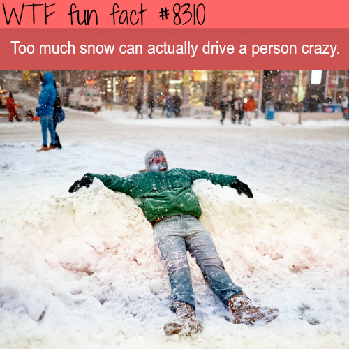 Too much snow will make you crazy - WTF fun facts
