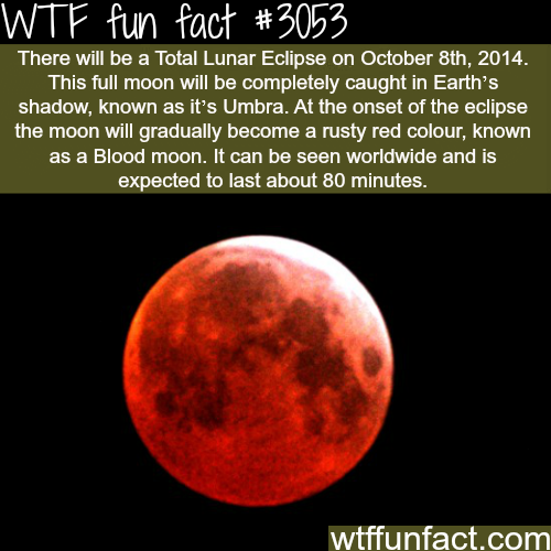 Total Lunar Eclipse on October 8th
