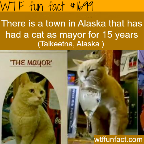 Town in Alaska that has a cat as a mayor - WTF fun facts