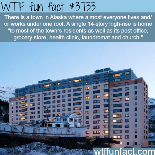 Town in Alaska where everyone works and lives in one buildingWTF fun facts