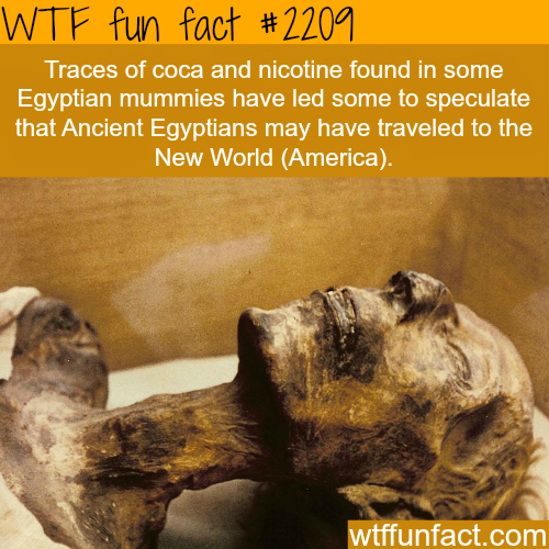 Traces of coca and nicotine found in Egyptian mummies -WTF fun facts