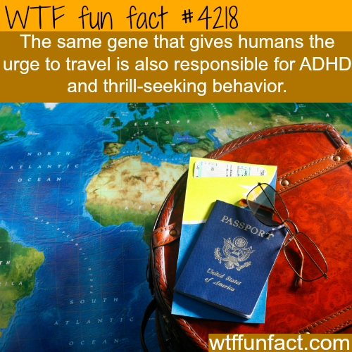 Traveling and thrill-seeking behavior -  WTF fun facts