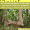 tree bending wtf fun facts