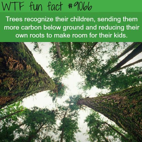 Trees recognize their children - WTF fun facts