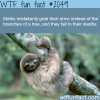 true facts about the sloth
