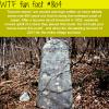 tsunami stones wtf fun facts