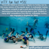 underwater hockey wtf fun facts