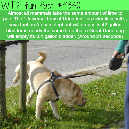 Universal Law of Urination - WTF fun facts