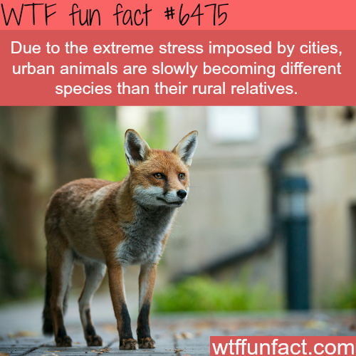 Urban animals are becoming different species due to stress - WTF fun facts