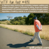 walking and creative thought wtf fun facts