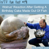 walrus reaction after getting a fish cake