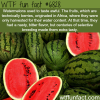 watermelons wtf fun fact