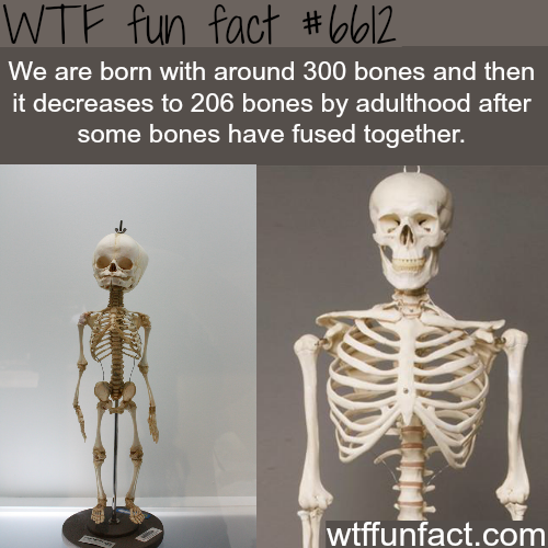 We are born with more bones when we were babies - WTF fun facts