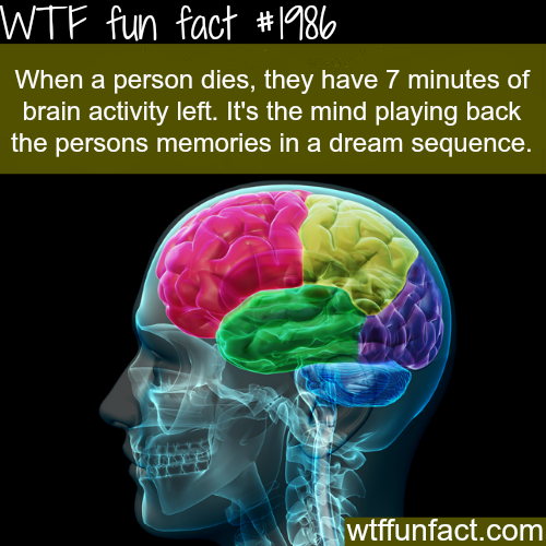 What happens to your brain when you die - WTF fun facts