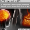 what is a gut feeling wtf fun facts