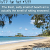 what is the fresh smell of beach air