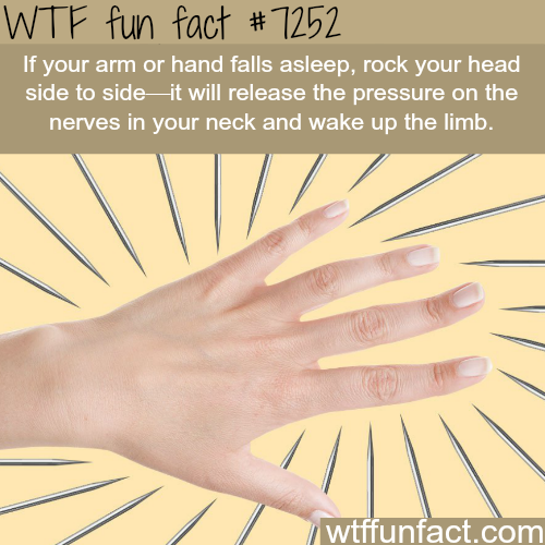 What to do when your arm falls asleep - WTF Fun Fact