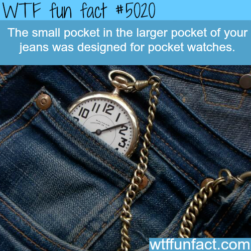 What's the small pocket of your jeans for - WTF fun facts