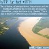 when the amazon river and rio negro meet wtf fun