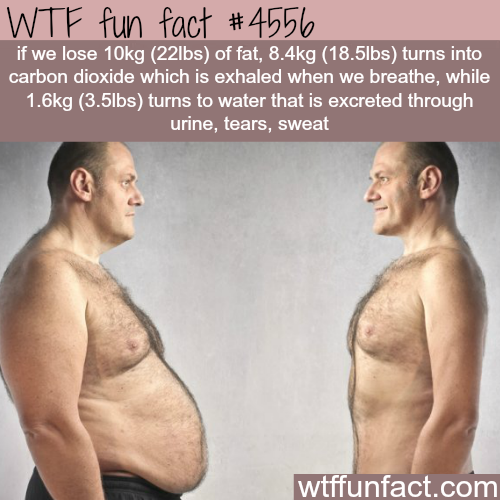 Where does the fat go when you lose it? -   WTF fun facts