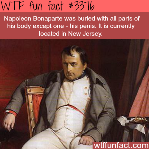 Where is Napoleon penis? - WTF fun facts