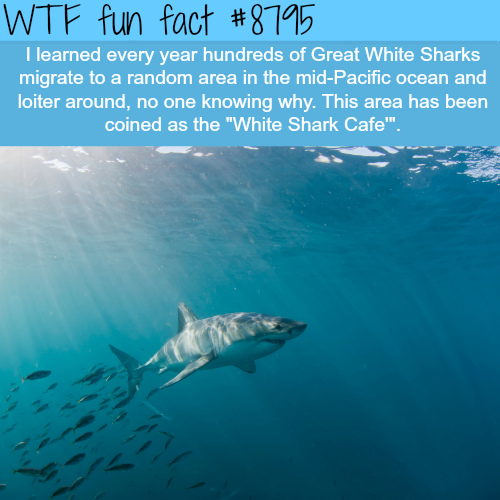 White Shark Cafe - WTF fun facts