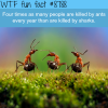 who kills more each year ant or sharks wtf fun