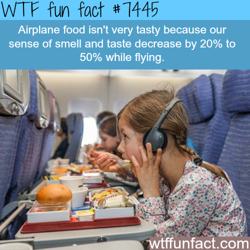 Why airplane food tastes bad - Facts