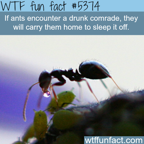 Why ants are much like humans - WTF fun facts