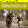 why big dogs are more well behaved wtf fun
