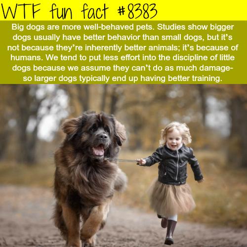 Why big dogs are more well-behaved? - WTF fun facts