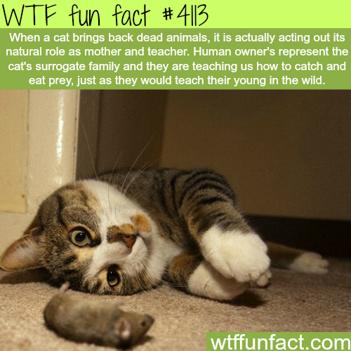 Why cat brings dead animals back -  WTF fun facts