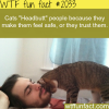 why cats headbutt people