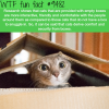 why cats need boxes wtf fun fact