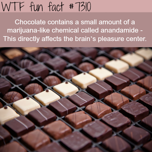 Why chocolate can be addictive - WTF fun fact