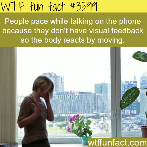 Why do people pace while talking on the phone -  WTF fun facts