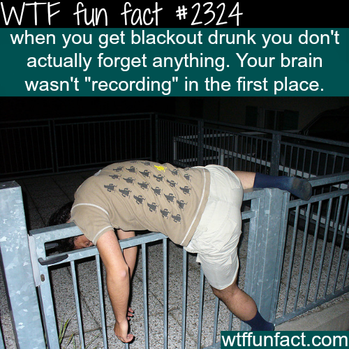 Why do you forget when you drink? - WTF fun facts