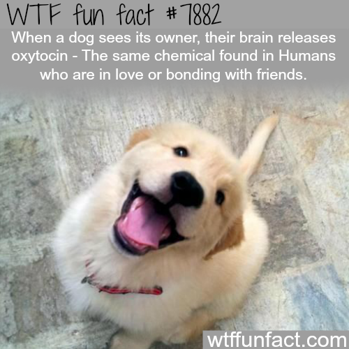 Why dogs get happy to when they see their owner - WTF fun facts